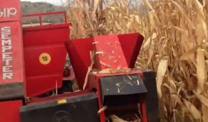 UŽAS KOD PETROVCA NA MLAVI! Muškarca samleo berač kukuruza!