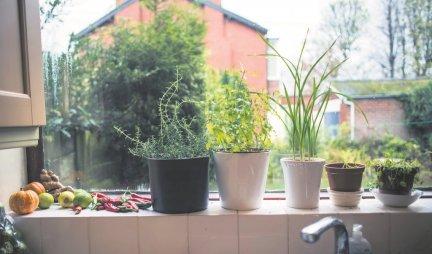 STARI TRIK KOJI KOŠTA 0 DINARA, A DELUJE ČUDESNO NA CVEĆE! Ako stavite ovo u saksiju, biljke će više LISTATI I CVETATI