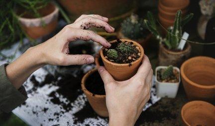 UZ POMOĆ OVOG TRIKA SOBNE BILJKE ĆE UVEK IMATI DOVOLJNO VODE! Cveće će PRODISATI