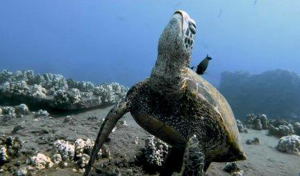 TUŽNO! Morske kornjače POJEDU PLASTIKU iz jednog razloga - mnogi ovo nisu znali!