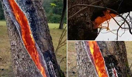 ČUDO NEVIĐENO! Grom udario u drvo, niste ni sanjali da OVO može da se desi! (VIDEO)