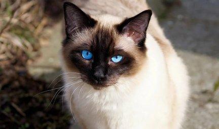 Upoznajte NAJPOPULARNIJU mačku na svetu! /FOTO/