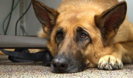 (VIDEO) PENZIONERKA IZ BEOGRADA JE HIT NA NETU! Evo kako je elegantno zaobišla zabranu i sama prošetala psa!