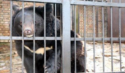 (VIDEO) KAMERE SNIMILE NEVEROVATAN PRIZOR NA KOJI SU SVI ČEKALI 150 GODINA! Pogledajte šta radi ovaj medved