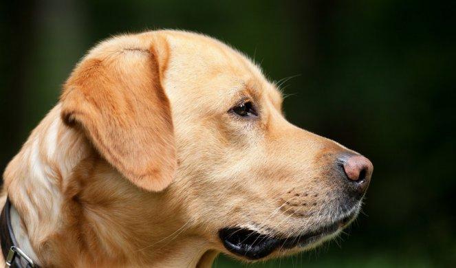 OBRATITE PAŽNJU! Krzno OTKRIVA koliko će dugo živeti vaš pas?!