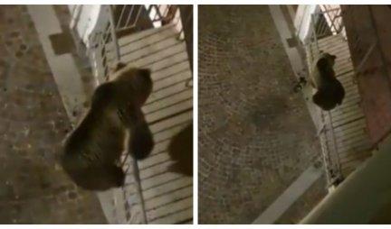 NIJE ŠVALER, MEDA JE! Nestvaran prizor u Italiji, nezvani gost iz šume ZAUZEO BALKON! (VIDEO)