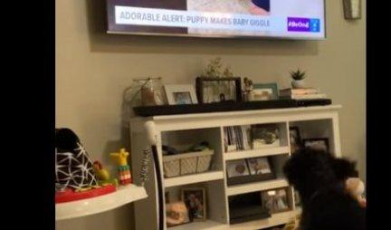 (VIDEO) Pas je stao ispred televizora, a kada je ugledao jedan prizor, uradio je NEVEROVATNU STVAR