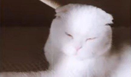 NIKO JE NIJE ŽELEO, A ONDA... Ova mačka ima RAZLIČITU BOJU očiju - nećete verovati kako IZGLEDA! (VIDEO)