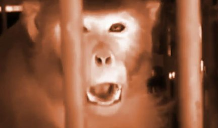 SVIREPI UBICA! Majmun alkoholičar OSUĐEN na DOŽIVOTNI ZATVOR - Mnoge je UBIJAO,  a desetine ljude je slao na PLASTIČNE OPERACIJE!