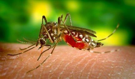 TRUDNICE I PIVOPIJE SU LEPAK ZA KOMARCE! Ovi insekti vas svaki dan GRICKAJU, evo šta trebate da uradite kako biste ih se rešili!