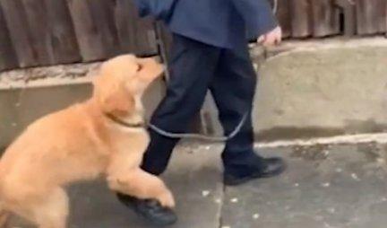 (VIDEO) Dečak je krenuo u školu, a onda je njegov pas odlučio da ga spreči i nastao je OVAJ URNEBESNI SNIMAK