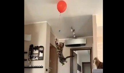 (VIDEO) ŠOK SNIMAK! Mačka je videla balon na plafonu i uradila NEVEROVATNU STVAR