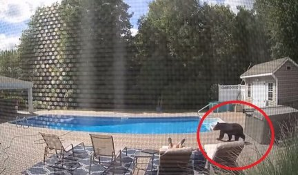 MEDVED MU JE ONJUŠIO NOGE! Jeziv snimak - Sedi kraj bazena i ne sluti da mu se približava ZVER!