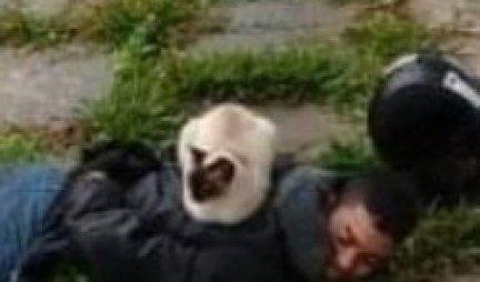 Mačka mu je stavila LISICE NA RUKE! Policija nije morala da uskače, jer je KRIMINALCA UHAPSILA ONA! (FOTO)
