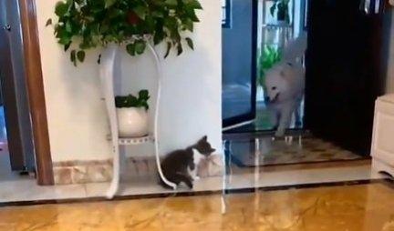 (VIDEO) Pas je ulazio u kuću, a mačka je odlučila da mu priredi podvalu: Pogledajte i kakvu!