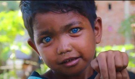 PLEME POSTALO POPULARNO ZBOG neobično plave boje očiju! Posetioci hrle samo da bi ih slikali (FOTO/VIDEO)