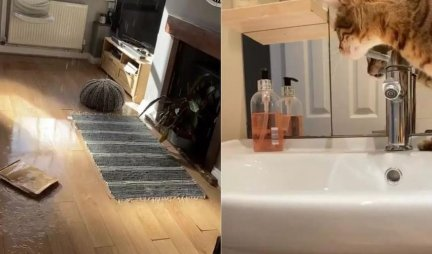 (VIDEO) Par se vratio iz šetnje i u dnevnoj sobi zatekao ŠOKANTAN PRIZOR