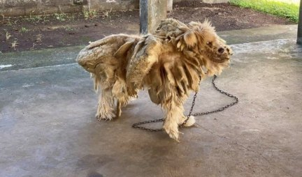 Izgled ovog psa šokirao je svet, NIKO NIJE MOGAO DA VERUJE DA JE VLASNIK MOGAO TOLIKO DA GA ZAPUSTI! Danas, izgleda ovako! (FOTO)