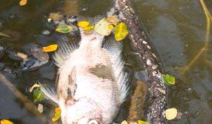 OVO JE NAJOPASNIJE MESTO NA PLANETI! Znate li priču o najzagađenijem jezeru? Sat vremena na obali znači SIGURNU SMRT!