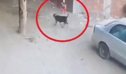MAČKA JOJ JE SPASILA SINA! Pas je napao dete na metar od majke - A ONDA SE POJAVILA ONA I SAMO JE FALILO DA POČNE DA REŽI! (VIDEO)