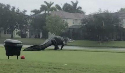 Igrali su golf, a onda im se prišunjala OVA NEMAN! Džinovski gost na terenu ih je ZAPREPASTIO! (VIDEO)