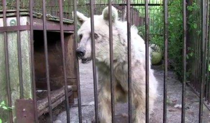 Medved je bio ZATVOREN U KAVEZU 30 GODINA! Evo šta je uradio kada je pušten na SLOBODU - NEVEROVATNO (VIDEO)