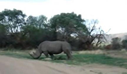 NEVEROVATNO OTKRIĆE NAUČNIKA: Pronašli vunenog nosoroga, starog najmanje 20.000 godina! /FOTO/
