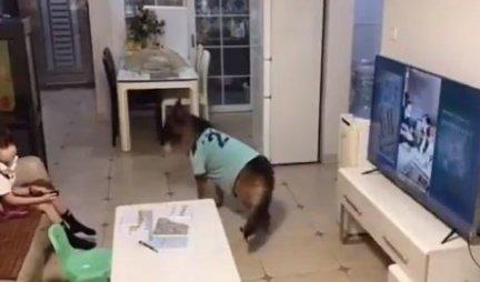 Devojčica i pas gledali su televizor: Onda je ljubimac čuo čudan zvuk i USLEDILA JE NEVEROVATNA SCENA /VIDEO/
