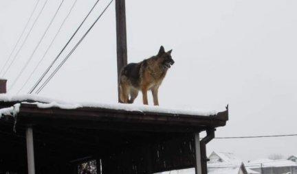 BEOGRAD NE PAMTI OVAKO TUŽNU SCENU! Pas nepomično u snegu danima čeka preminulog vlasnika!