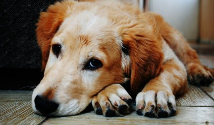 Znate li ZAŠTO psi naginju glavu dok vas slušaju?