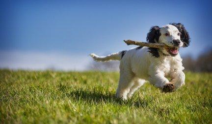 OBOŽAVAJU LJUDE! Ovo su najdruželjubivije rase pasa!